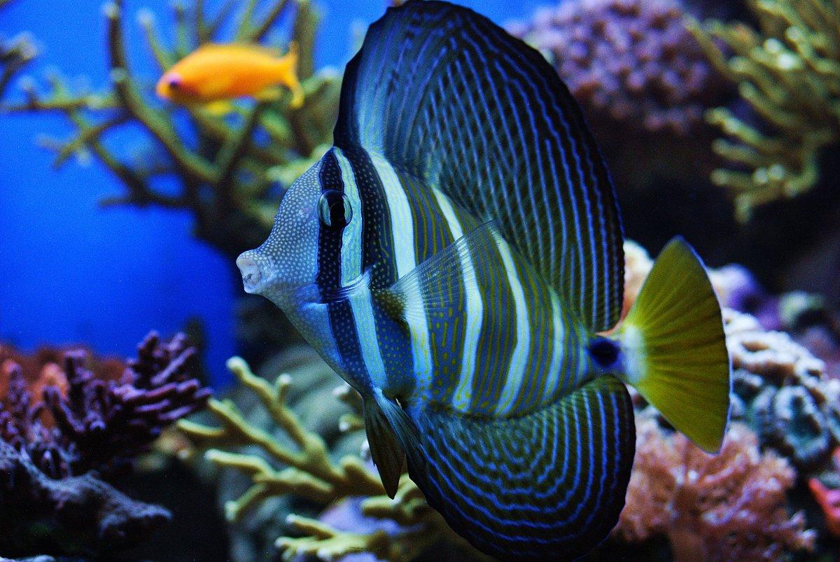 Leben im Aquarium