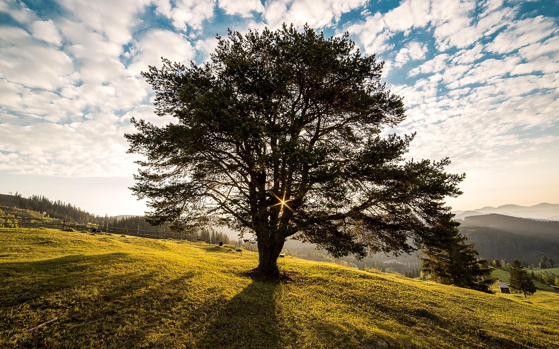 Der Baum der Früchte