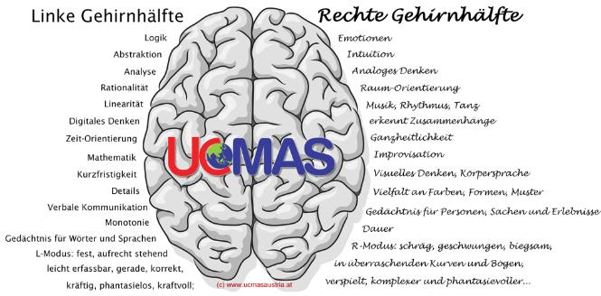 #8 Die Magie der zwei Gehirnhälften
