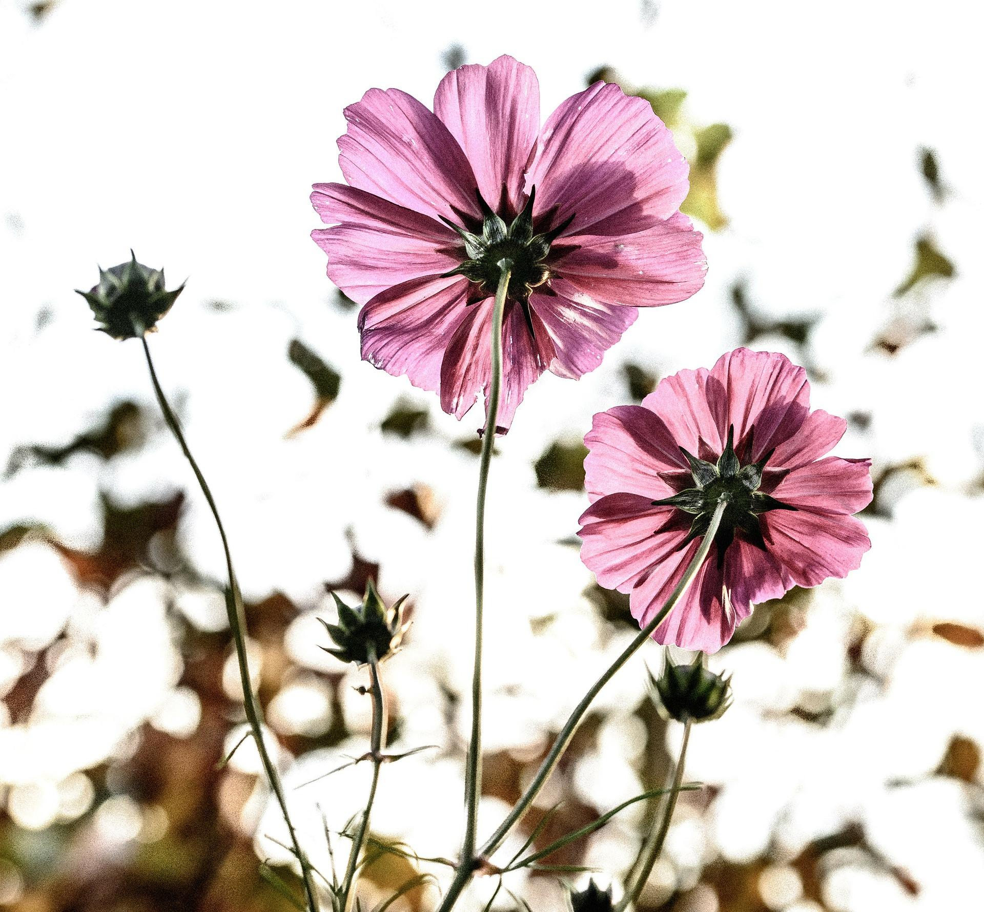 Allergie- Was ist das eigentlich und kann es geheilt werden?